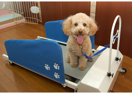 doggy treadmill for lazy dogs and lazier owners buy dog 450x320