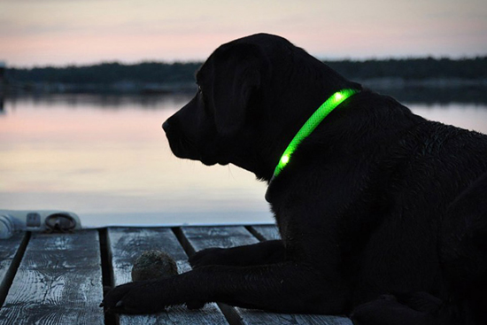 03 Glowdoggie LED Dog Collar