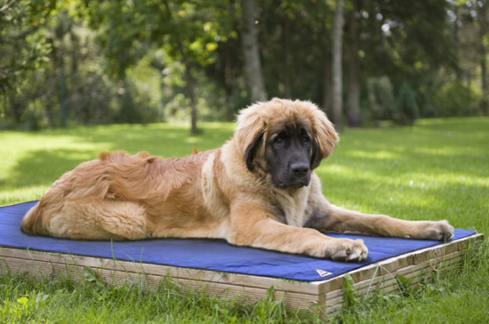 keep your pooch cool with this evaporative dog cooling mat. Black Bedroom Furniture Sets. Home Design Ideas