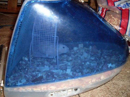 iMac Hamster Cage