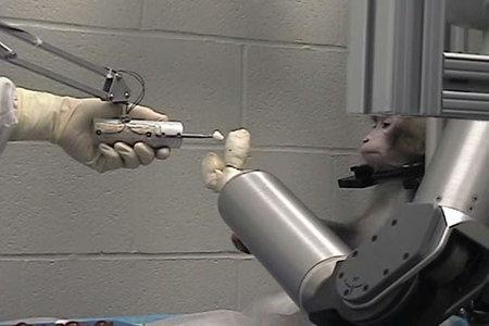 brain controlled robotic arm pdf