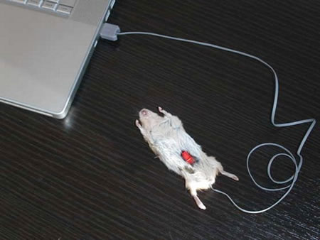 Computer_mouse_3.jpg