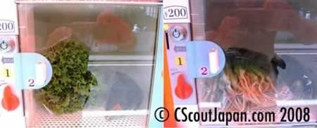 vegetable-vending-machine-1.jpg